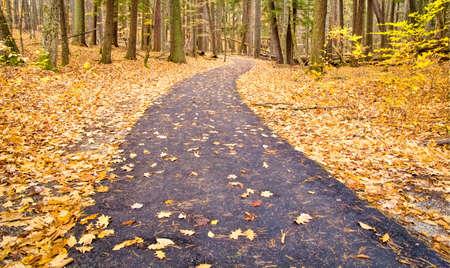 Herfst Bos Pad. Kronkelende asfalt weg door de herfst de bossen van Hartwick Pines State Park in Grayling, Michigan. Stockfoto