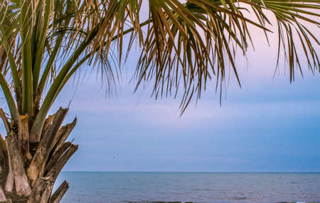 grand strand: Carolina Paradise. Palmetto tree frames the Atlantic Ocean horizon. Myrtle Beach, South Carolina. Stock Photo
