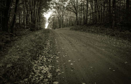 The Dark And Lonely Road Home.  Country road through the forest.