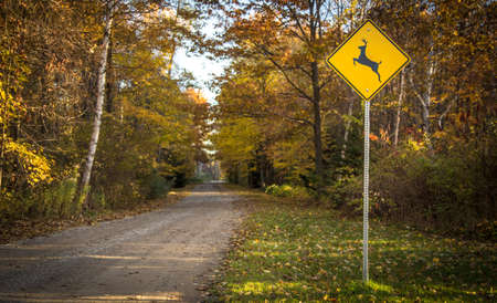 trip hazard sign: Rural Road With Deer Crossing Sign. Deer crossing sign on the shoulder of a rural road in autumn.