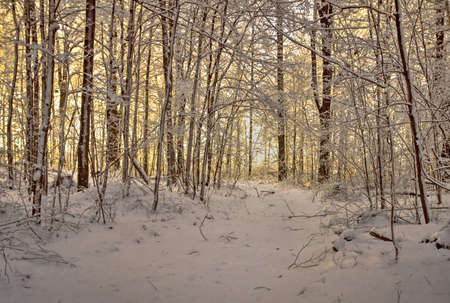 michigan snow: Winter Forest Path. The sun rises in the background of a forest path encased in a beautiful fresh fallen snow.