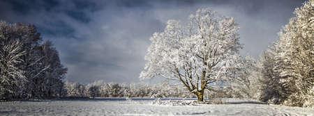 blanketed: Panoramic Pristine Winter Scenery. Panoramic and pastoral scene blanketed by fresh fallen snow showcasing the frigid beauty of winter. Yale, Michigan.