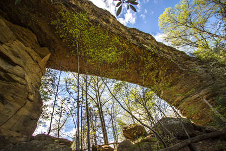 rentals: Natural Bridge Arch Panorama.  Visitors to Natural Bridge State Park can ride a skylift to view and walk across the sandstone arch. The park also offers hiking, fishing,  dining, camping and cabin rentals.