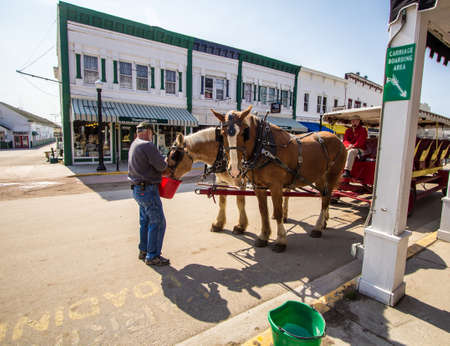 belgian horse: Mackinaw Island, Michigan, USA - May 6, 2016: Employees waters Belgian draft horses at the Mackinaw Island Carriage company which offers horse drawn tours for tourists to the island.