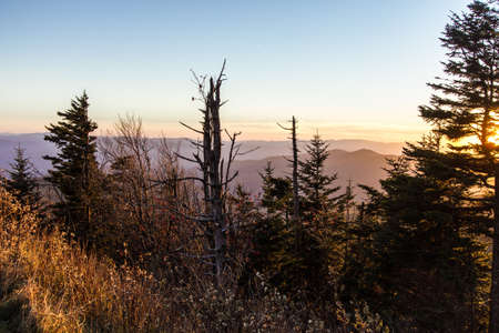 decimated: Death Of A Forest.  Smoky Mountain sunset horizon with barren hemlock trees in the foreground. The Hemlocks in the boreal forests are being decimated by the wooly adelgid in the national park.