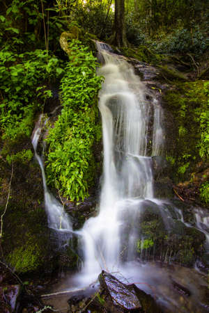 Great Smoky Mountain Waterfall. Roadside waterfall rushes down the mountain side through green foliage along Newfound Gap Road in the Great Smoky Mountains National Park in vertical orientation.