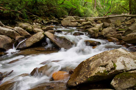 great smokies: Cool Mountain Stream. Mountain stream flows through the lush green forests of the Great Smoky Mountains National Park in Gatlinburg, Tennessee. The Smokies are Americas most visited national park.