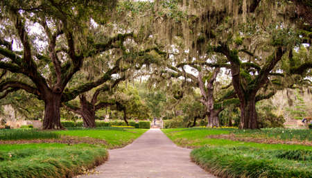 Myrtle Beach, South Carolina, USA - February 23, 2014: The famous Avenue of Oaks in Brookgreen Gardens features live oaks and Spanish moss native to the coastal South Carolina low country.
