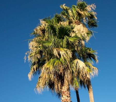 swaying: Palm trees swaying Stock Photo