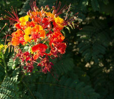 Orange Bird of Paradise Flower