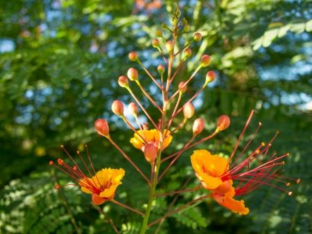 Praying Mantis on Bird of Paradise Flower photo
