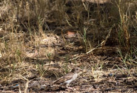 interakcje: Młoda Sparrow Zdjęcie Seryjne