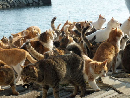 cats in an island # 19
