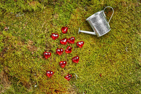 Green background of forest with moss can and spilled red hearts Stock Photo