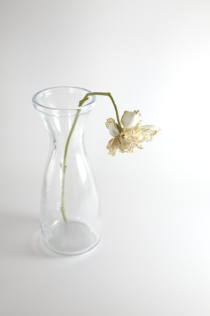 wilting: Flores marchit�ndose