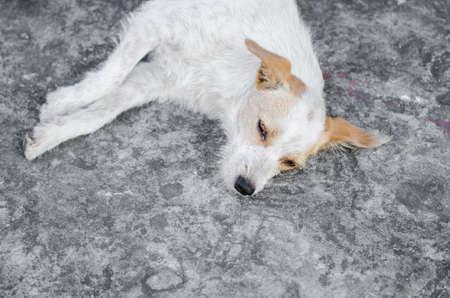 pity: a pity dog