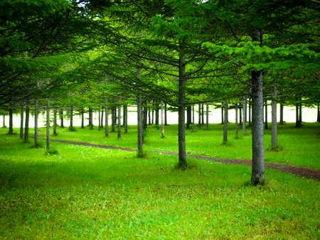The Tree alignment Reklamní fotografie