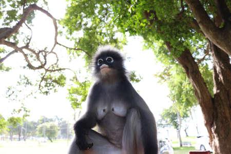 ourdoor: thai asia monkey in ourdoor Stock Photo