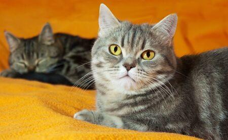Two  cats on orange background photo
