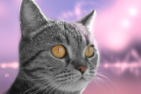 Close up of a cats head on abstract background photo