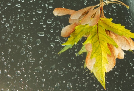 dry leaves on wet background with water drops showing autumn or rain concept photo