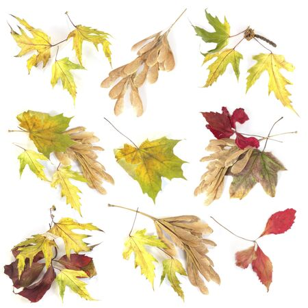 set of yellow and red fall leaves on white background Stock Photo - 10981360