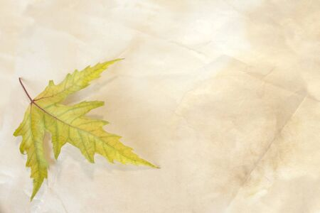fall maple leaf on an old paper, vintage background Stock Photo - 10981362