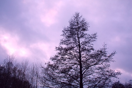 Leafless winter tree against purple cloudy sky background Stock Photo - 11807008