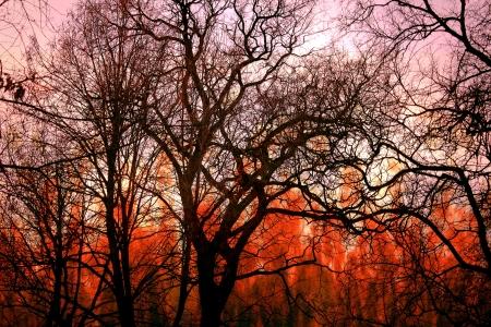 A bushfire burning in forest
