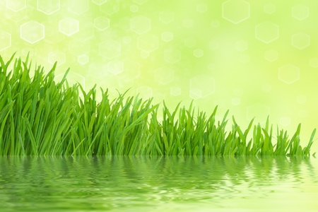 abstract spring light green grass background with reflection photo