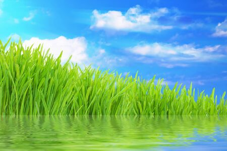 horizon reflection: Spring nature background, green grass with water reflection and cloudy sky Stock Photo