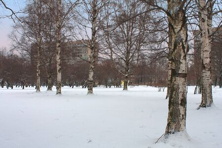 Winter city park in snow. St - Petersburg, Russia photo