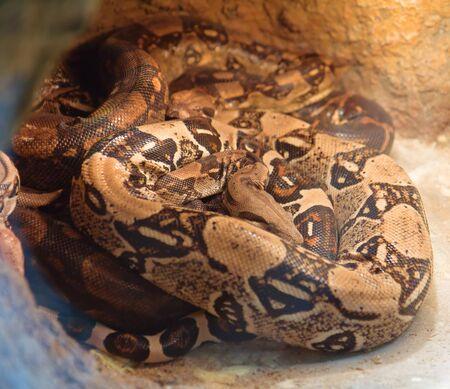 Snakes in a terrarium in the Kyiv Zoo, Ukraine Stock Photo - 13274129