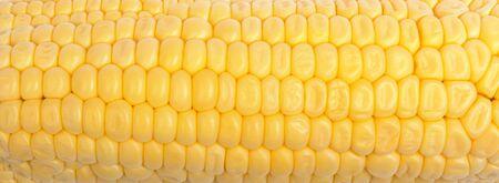 close up of freshly harvested corn background photo