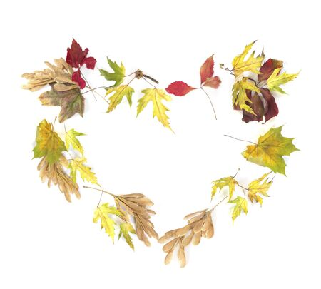 fall leaves frame isolated on a white background in the shape of a heart photo