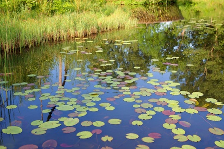 beautiful fish pound with cane and water lilies photo