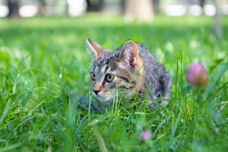 Domestic cat hunting on the grass close up photo