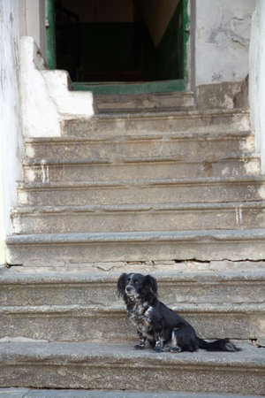 Lonely black Dog sitting on old steps photo