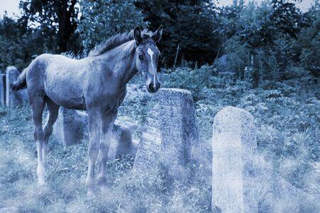 dead duck: horse on the old jewish cemetery in Berdychiv, Zhytomyr Region, Ukraine