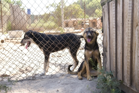 Dogs in cage at the animal shelter Stock Photo - 17045927