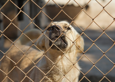 Dog in cage at the animal shelter Stock Photo - 17710026
