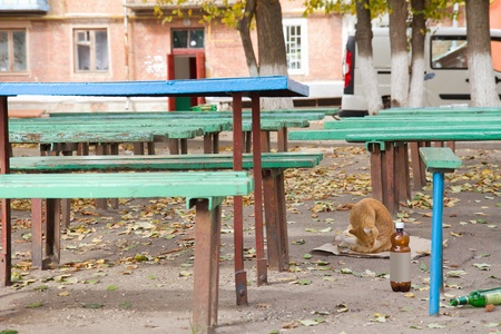 A stray cat sitting under old benches photo