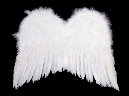 wings angel: Soft white angel wings isolated on black