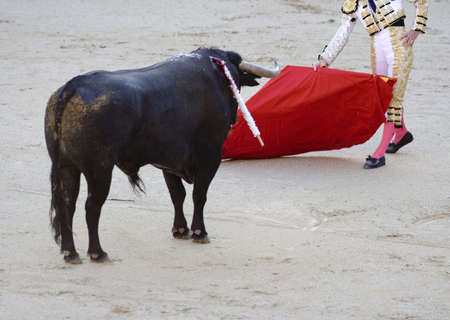 torero: Bull facing a torero (or matador) in the bullring. Stock Photo
