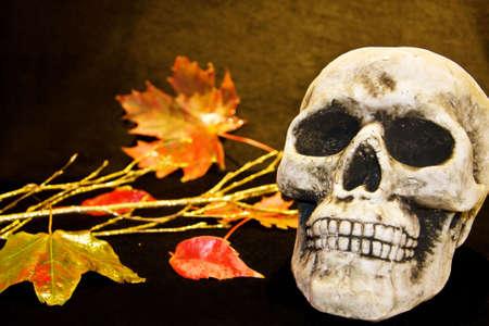 dead leaves: Miedo de cr�neo de Halloween y hojas muertas Foto de archivo