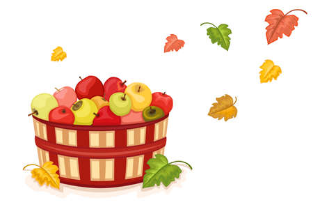 Autumn harvest with wicker basket filled with tasty apples. Isolated over white background. Illustration