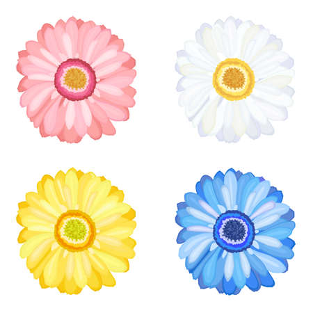 Daisy Gerbera set of four flowers. Isolated over white background Vector