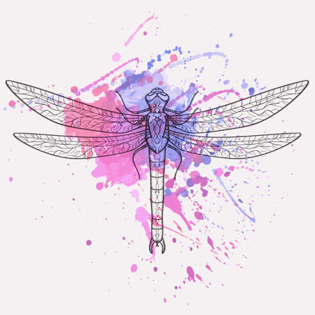 dragonfly wing: Vector illustration of dragonfly with watercolor splash Illustration