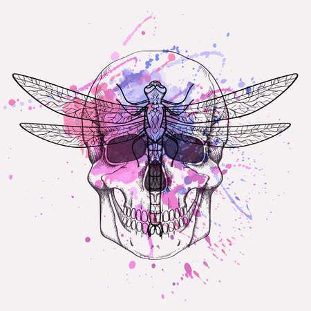 skull biology: Vector grunge illustration of human skull and dragonfly with watercolor splash