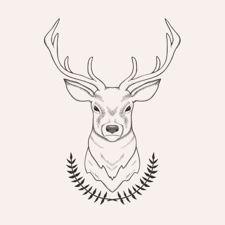 male animal: Vector hand drawn illustration of deer and laurel